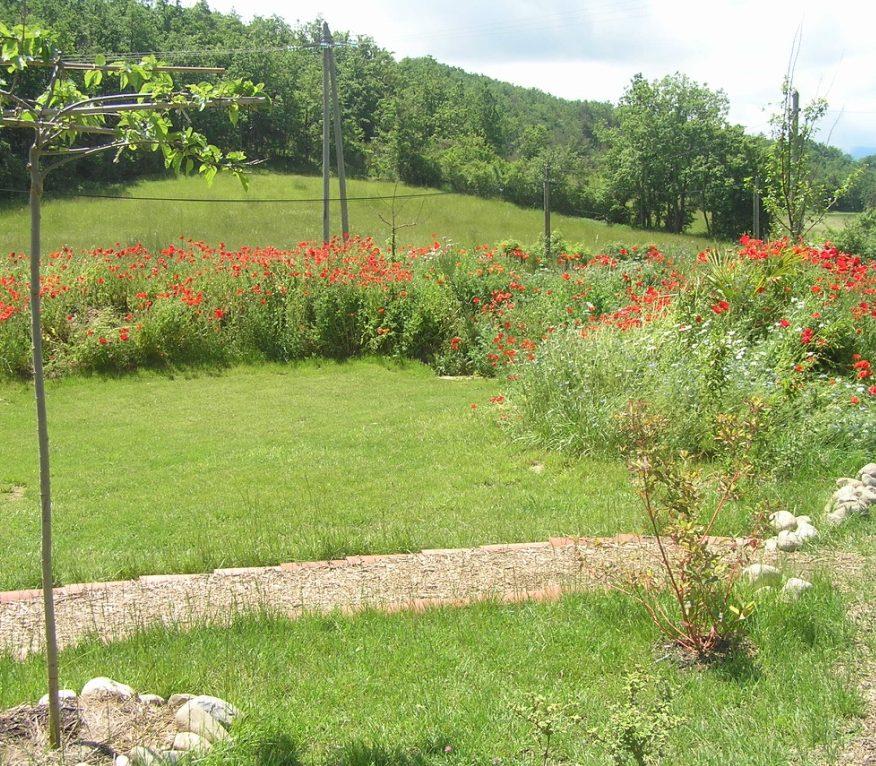 De tuin in mei